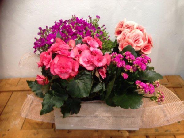 Plantas de temporada en caja de madera
