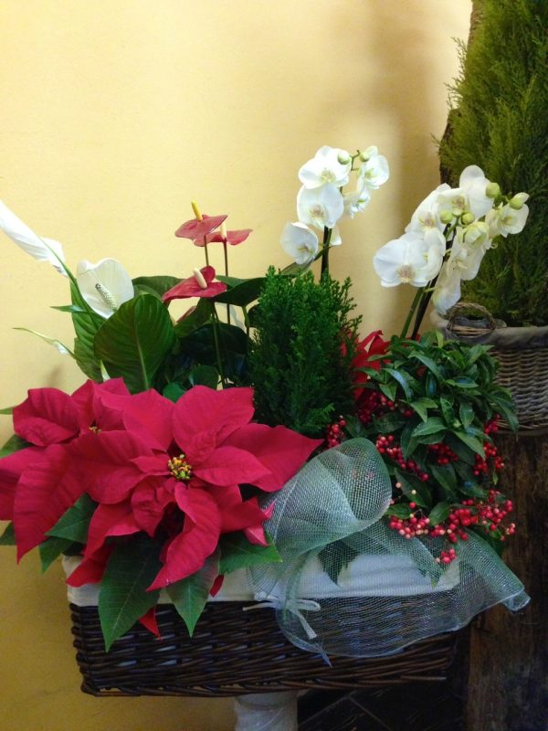 Cesta especial de Navidad