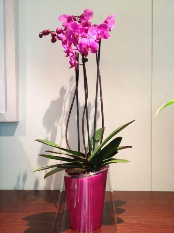Orquídea con cristal