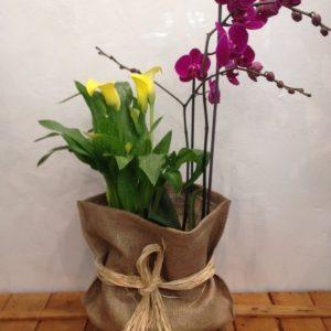 Orquídea y Cala con saco