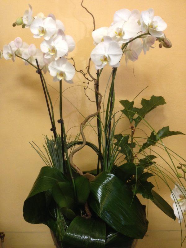 Dos Orquídeas